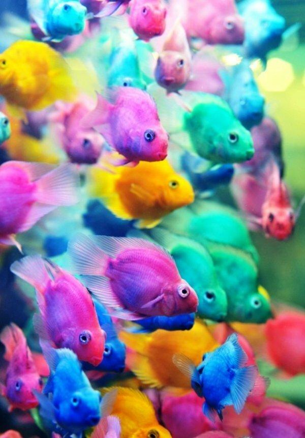Самые яркие попугайские окрасы Cichlasoma