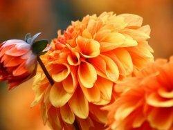 Виды цветов названия