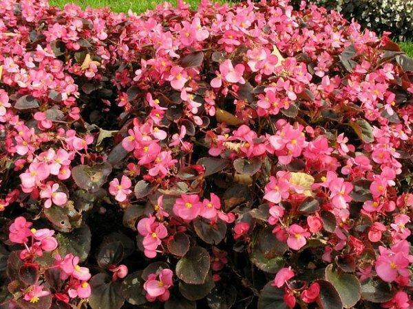 Виды цветов названия и фото