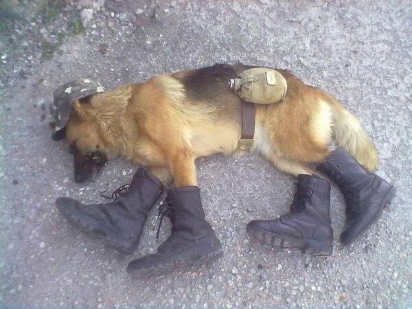 Спящая собака после службы
