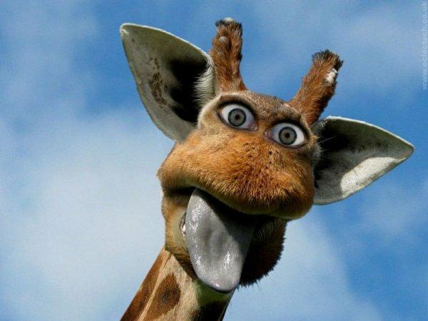 На фото неординарный и позитивный жираф