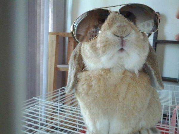 Изобретательный кролик, как на фото, – само совершенство