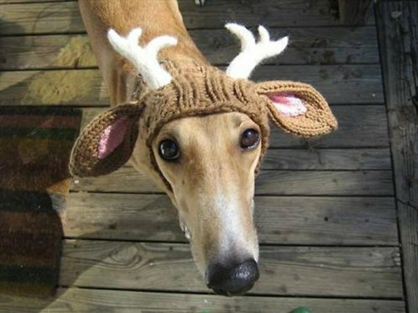 Но фото животное, которое готово ради тебя на все
