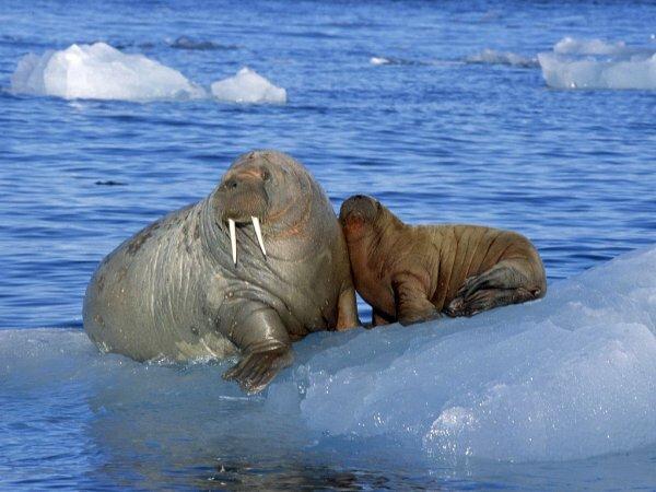 Всего в Красную книгу России занесено более 400 видов животных, среди которых не только млекопитающие. Туда включены также птицы, пресмыкающиеся, земноводные, рыбы, ракообразные, насекомые, моллюски и черви