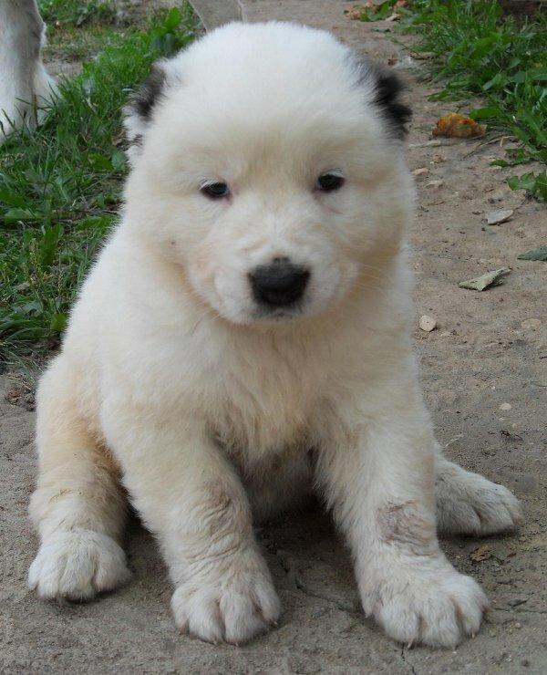 Все породы собак с фото названием и описанием