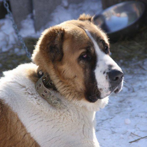 Фото пород собак с названиями