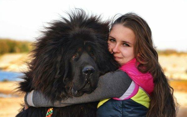 Для этой породы характерно наличие достаточно мощной интуиции, и если собака решит, что данный субъект ей не нравится, надо быть готовым к предотвращению возможного конфликта интересов